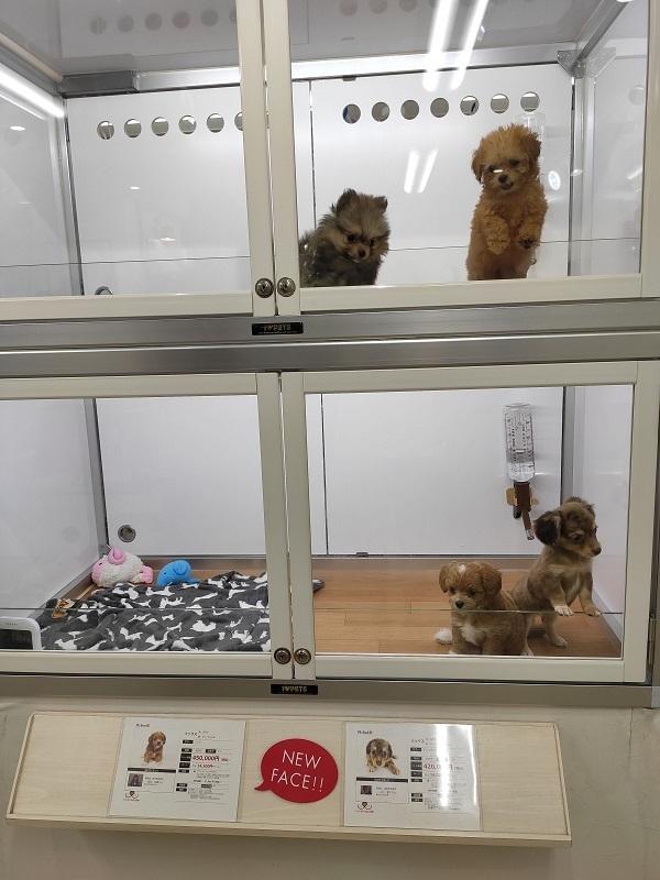 tienda de mascotas Shibuya